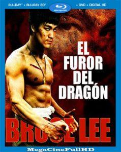 El Furor Del Dragón (1972) HD 1080P Latino ()